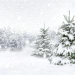 Beschäftigungsideen für den Winter