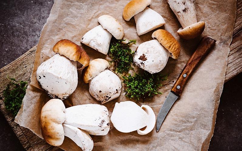 Pilzrezepte im Herbst - schnell und raffiniert