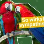 Papageien-Technik? So wirkst Du sofort sympathischer