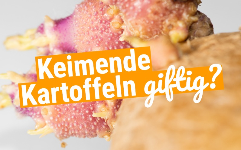 Vorsicht giftig: Darf man keimende Kartoffeln essen?