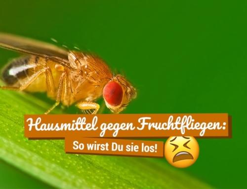 Hausmittel gegen Fruchtfliegen: So wirst Du sie los!