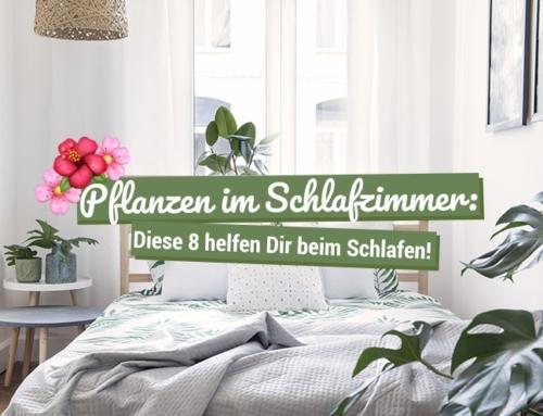 Pflanzen im Schlafzimmer: Diese 8 helfen beim Schlafen!